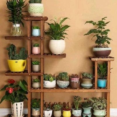 indoor plants in Kenya